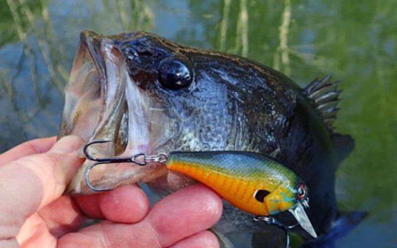 baits for spring bass